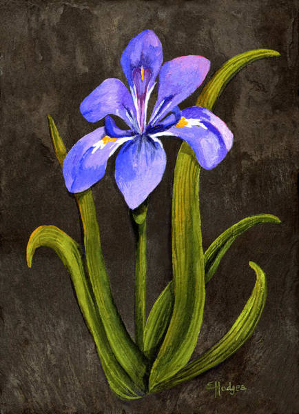 Slate Painting - Louisiana Iris by Elaine Hodges