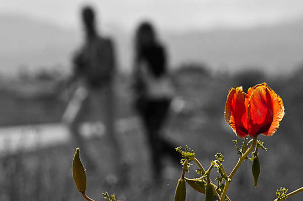 Photograph - Love Is Everywhere by Okan YILMAZ