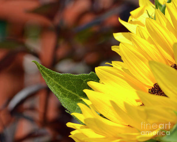Photograph - Love Me Yellow by Traci Cottingham