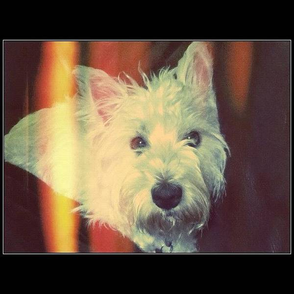 Wall Art - Photograph - Love This Dog So Much by Harriet G