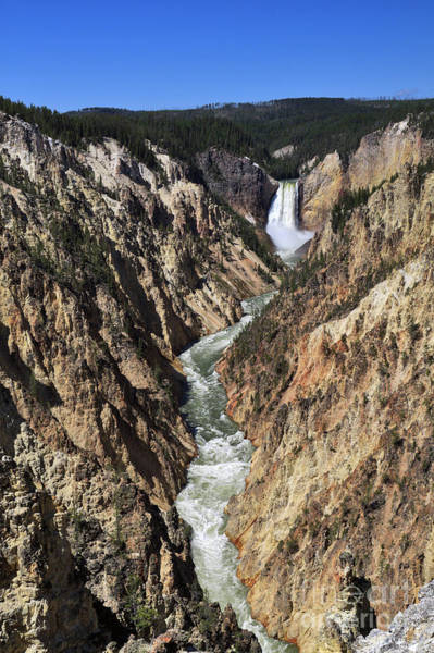 Wall Art - Photograph - Lower Falls Of The Yellowstone River by Louise Heusinkveld