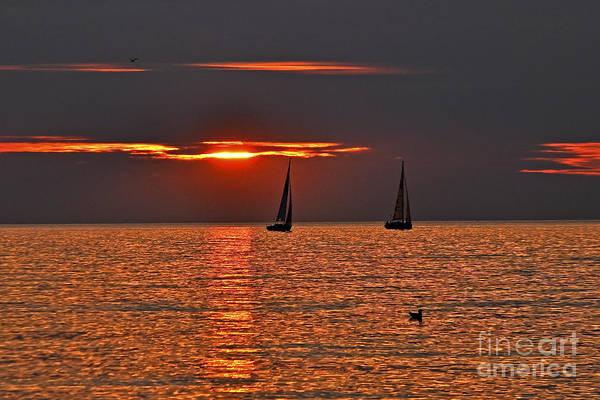 Photograph - Coral Maritime Dream by Silva Wischeropp