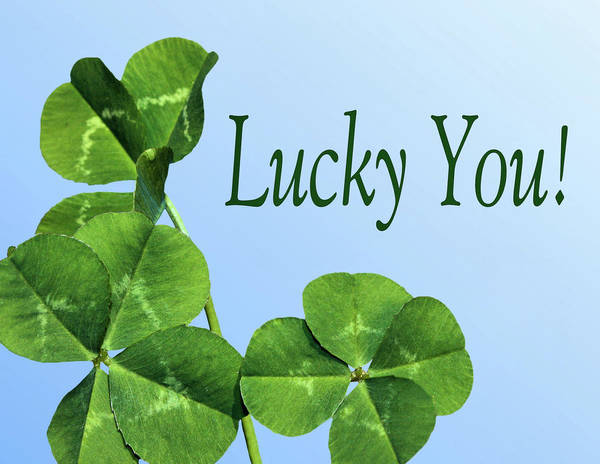 Four Leaf Clover Photograph - Lucky You by Kristin Elmquist