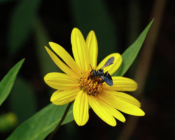 Sandra Anderson Wall Art - Photograph - Lunch At Coreopsis by Sandra Anderson