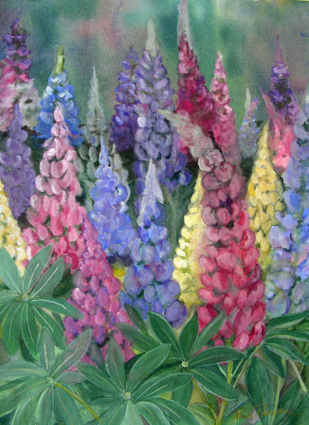 Painting - Lupines by Paula Robertson