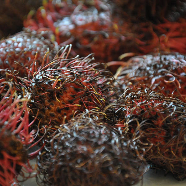 Photograph - Lychee Fruit 2 by Frank Mari