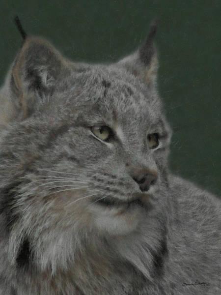 Colorado Wildlife Digital Art - Lynx Painterly by Ernie Echols