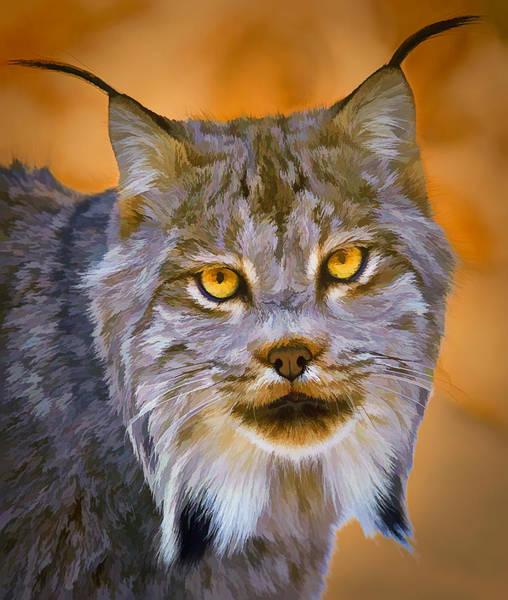 Photograph - Lynx by Steve Zimic