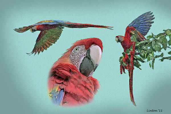 Scarlet Digital Art - Macaw Sketch by Larry Linton