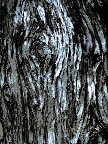 Photograph - Mackinac Island Bark by Beth Akerman