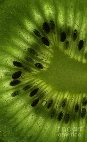 Kiwifruit Photograph - Macro Kiwi Slice by Janeen Wassink Searles