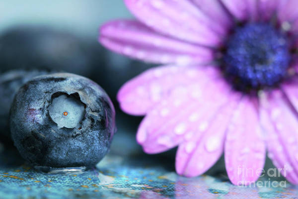 Blue Berry Photograph - Macro Shot Of A Blueberry by Sandra Cunningham