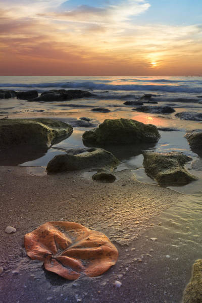 Hobe Sound Photograph - Magic Every Moment by Debra and Dave Vanderlaan
