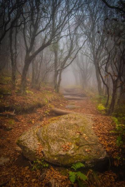 Photograph - Magical Path by Joye Ardyn Durham