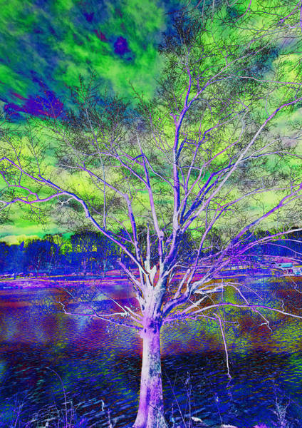 Photograph - Magical Tree 2 by Sheila Kay McIntyre