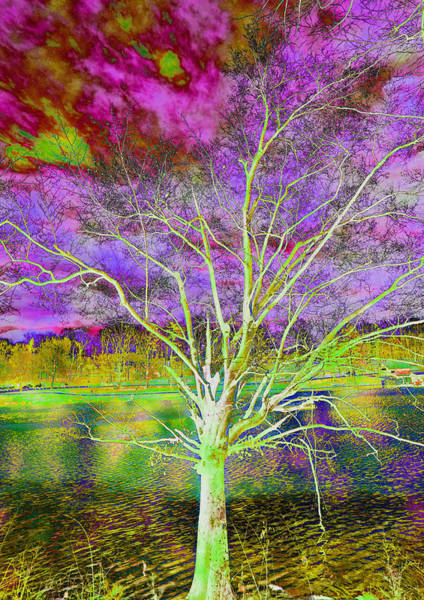 Photograph - Magical Tree 4 by Sheila Kay McIntyre