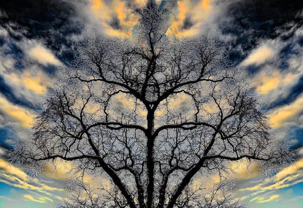 Hakon Photograph - Magical Tree by Hakon Soreide