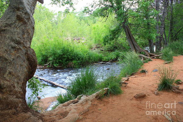 Red Rocks Of Sedona Photograph - Magical Trees At Red Rock Crossing by Carol Groenen