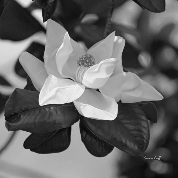 Summertime Wall Art - Photograph - Magnificence In Black And White by Suzanne Gaff