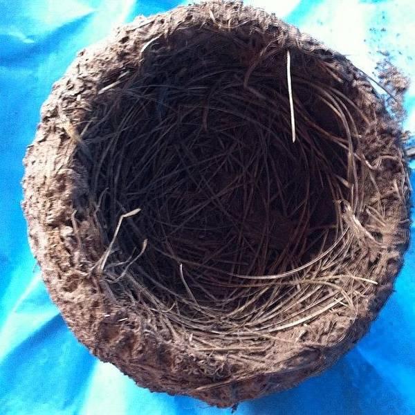 Nature Seekers Photograph - Magnificent Design Bird Nest #bird#nest by Seeker Seeker