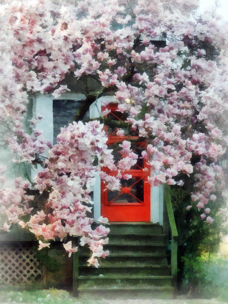 Photograph - Magnolia By Red Door by Susan Savad