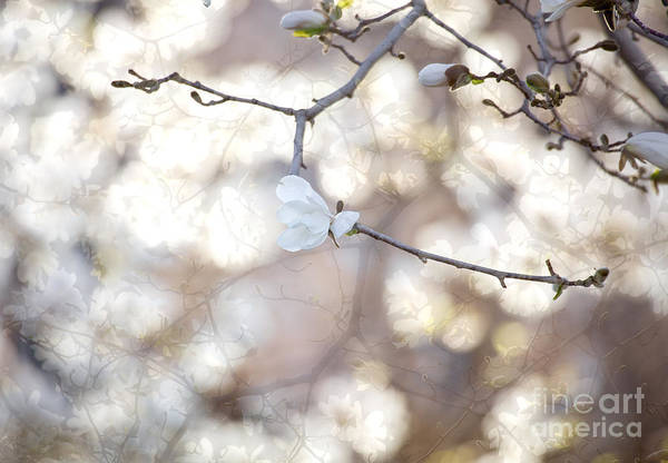 Wall Art - Photograph - Magnolia Dream by Susan Cole Kelly