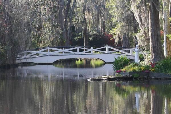 Photograph - Magnolia Gardens by Virginia Bond