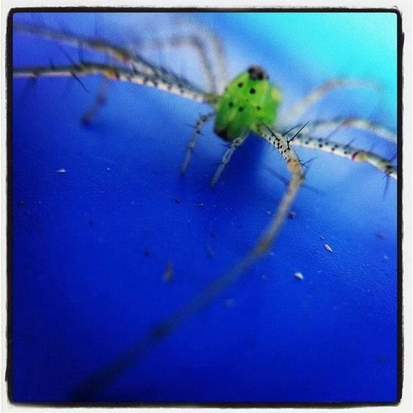 Eden Wall Art - Photograph - Magnolia Green Jumper by Dave Edens