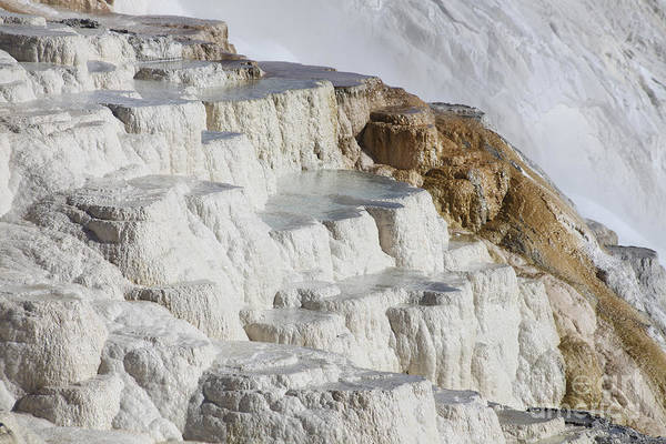 Yellowstone Caldera Photograph - Main Travertine Sinter Terrace. Mammoth by Richard Roscoe