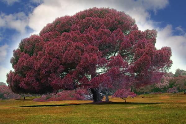 Wall Art - Photograph - Majestic Tree Photo Digital Painting by Heinz G Mielke
