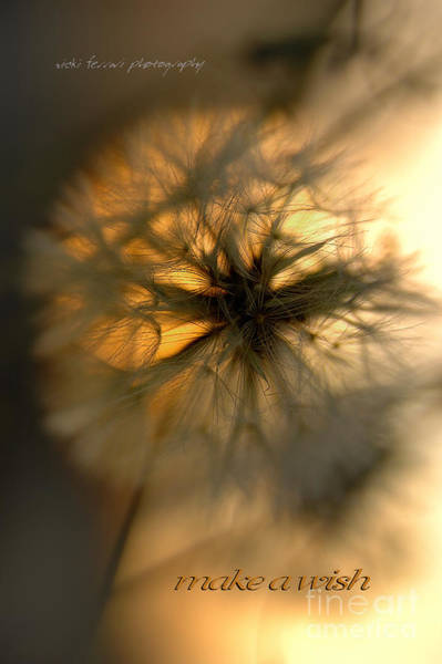 Photograph - Make A Wish by Vicki Ferrari