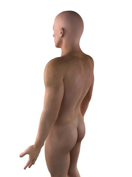 Buttocks Digital Art - Male Upper Body, Artwork by Sciepro