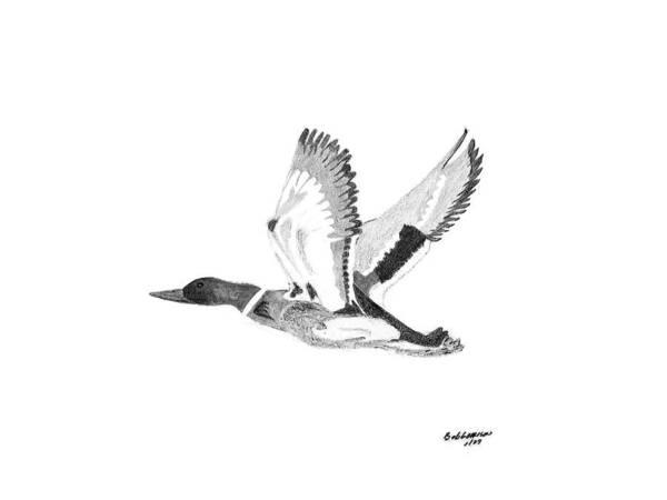 Duck Hunting Drawing - Mallard by Bob and Carol Garrison