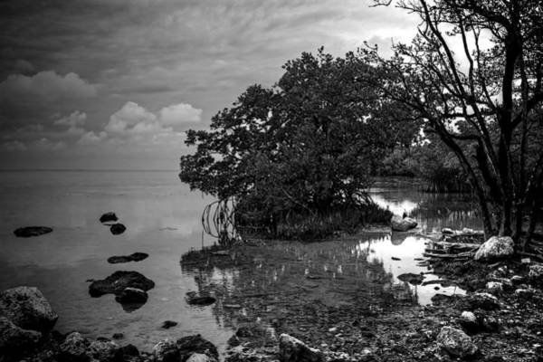 Wall Art - Photograph - Mangrove Shore by William Wetmore