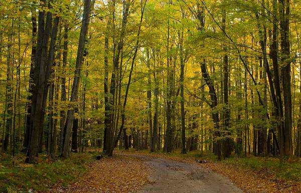 Manistee Photograph - Manistee National Forest by Twenty Two North Photography