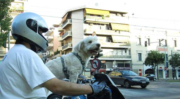 Photograph - Man's Best Friend A Dog Riding On A Motorcycle Bike by John Shiron