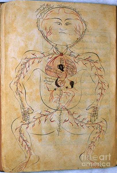 Photograph - Mansurs Anatomy, Arterial System, 15th by Science Source