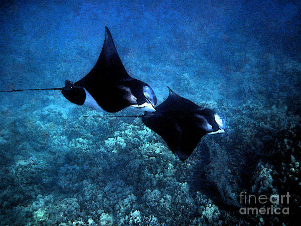 Photograph - Mantas In Synch by Bette Phelan