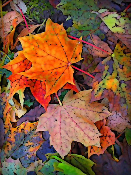 Debris Digital Art - Maple Leaves  by Geoff Strehlow