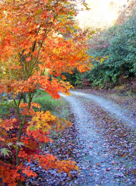 Photograph - Maple Road by Duane McCullough