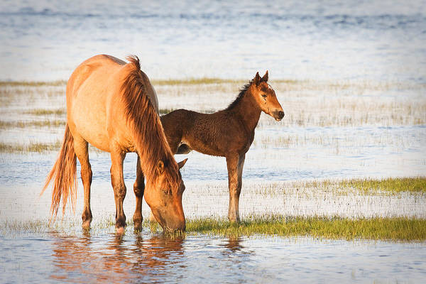 Photograph - Mare And Foal by Bob Decker