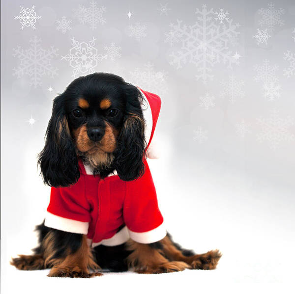 Sweet Puppy Photograph - Marmaduke With Snowflake Background by Jane Rix