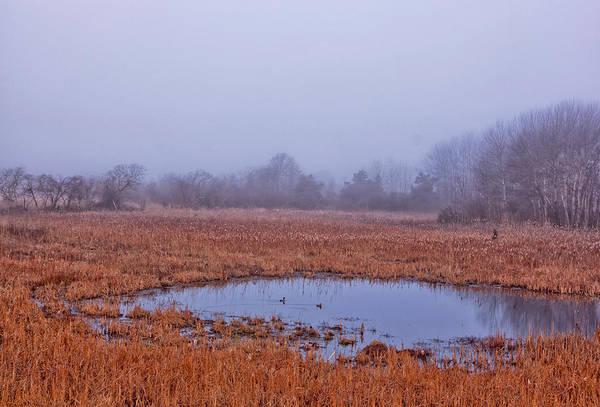 Photograph - Marsh And Fog by Tom Singleton