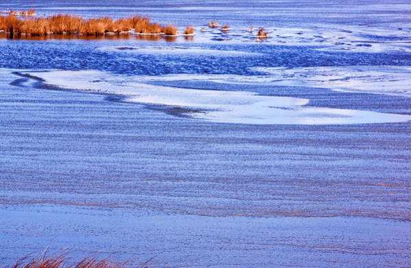 Photograph - Marsh Grass And Ice by Tom Singleton