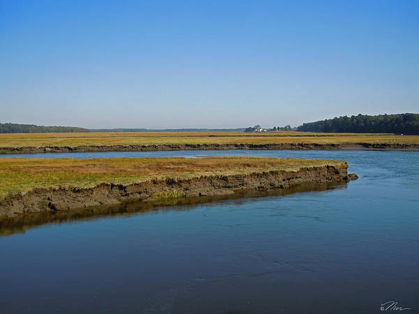 Photograph - Marsh In Maine by Nancy Griswold