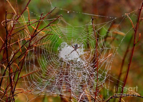 Photograph - Marsh Spider Web by Carol Groenen