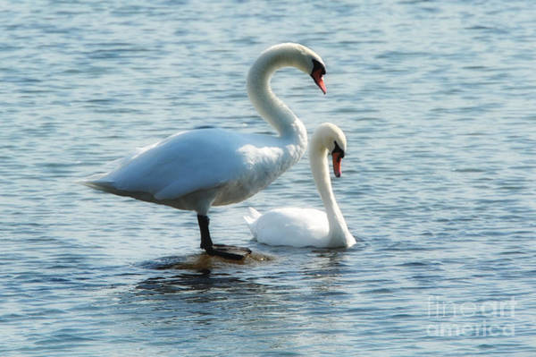 Art Print featuring the photograph Mating Pair by Andrea Kollo