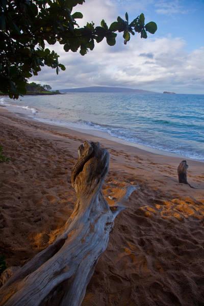 Wall Art - Photograph - Maui Driftwood by Patrick  Flynn