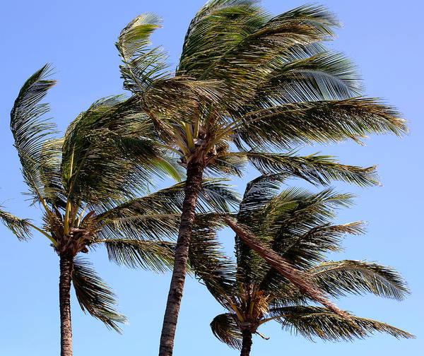 Photograph - Maui Tradewinds by Tony and Kristi Middleton