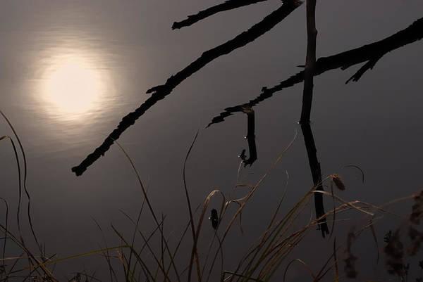 Mauve Photograph - Mauve Kind Of Morning by Susan Capuano